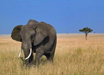 Elephant Poaching Hotspots Identified