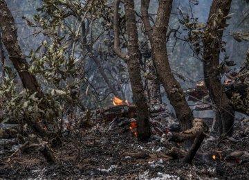 Gilan Forests Burn