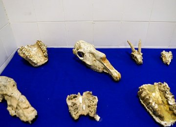 Restituted Fossils Unveiled