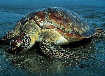 Making Way for Turtles