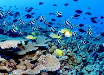 Rising Carbon Emissions Threaten Oceans