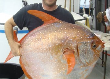 World's First Warm-Blooded Fish Discovered