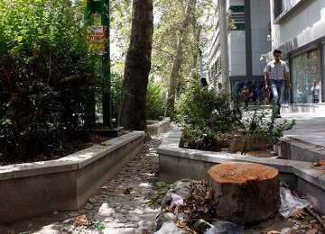 TM Official Claims Protection of Valiasr Trees a Priority