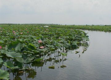 No End in Sight to Anzali Wetland Plight