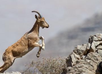 Ardestan Wildlife Thriving
