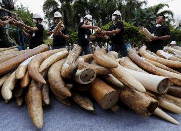 Yahoo Denounced for Fueling Elephant Extinction