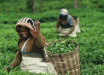 Lanka Economy Grows