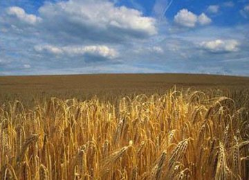 Russia Grain Output to Reach 100m Tons
