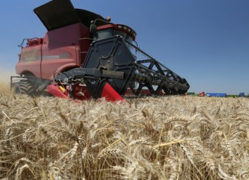Russia Grain Harvest to Dip, Farm Loans Dry Up