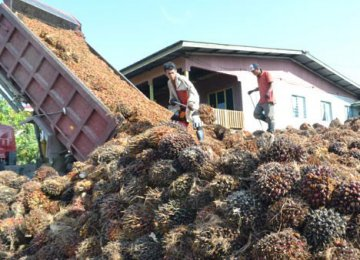 Palm Oil Production Surpasses Global GDP Growth
