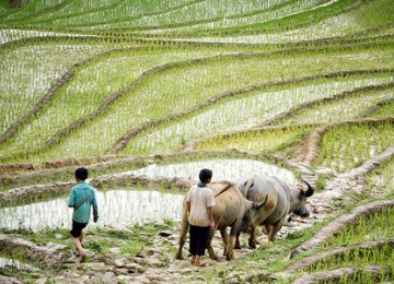 Vietnam Agriculture to Benefit From Free Trade