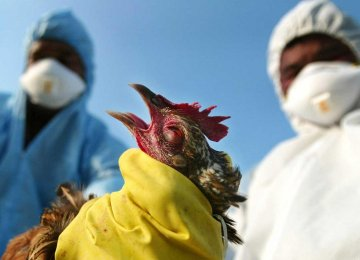 No Cases of H5N6 Human Infection Reported in Iran