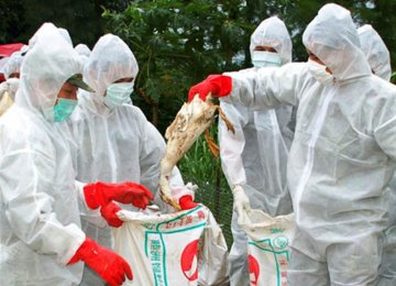 The spread of avian flu to broiler chicken farms is likely to lead to a price rise in chicken meat prices.