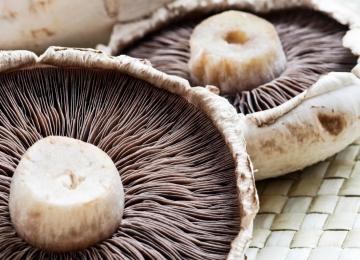 Iran 6th Biggest Mushroom Producer Worldwide