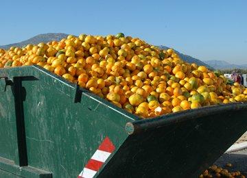 Iran's Agro Waste Staggering