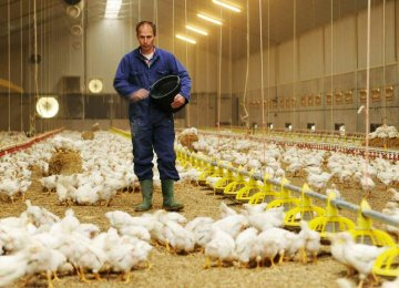 16,500 Chicken Broiler Farms Operational