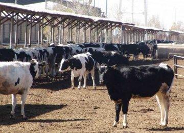 Livestock Farms PPI at 36%