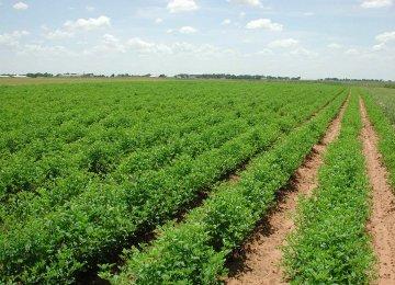 Tehran to Host Agro Confab