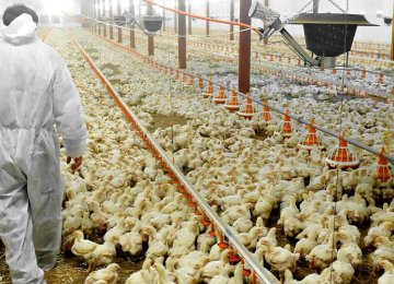 Chicken and egg exports have come to a halt following the outbreak of the highly contagious virus.