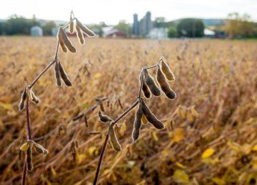 US Continues to Ship Soybeans to Iran Despite Sanctions