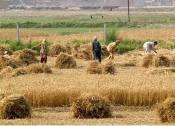 Iran's agriculture sector grew 6% during the first half of the current Iranian year (started March 20, 2016).