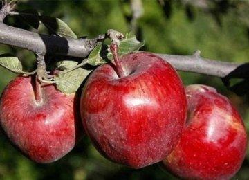 West Azarbaijan: Iran's Apple Production Hub
