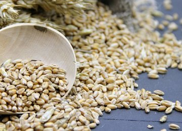 Iran's Barley Imports at $600m Last Year