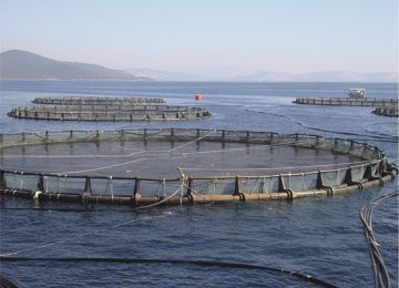 Loans for Expansion of Cage Fish Farming