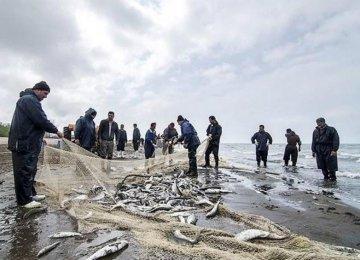44% Rise in Bony Fish Caught in Caspian Sea