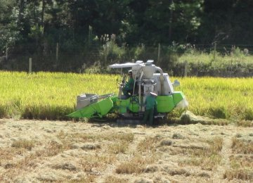 Rice Farming Mechanization Reaches 80%
