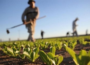 Small-Scale Farms Handle 86% of Agro Activities
