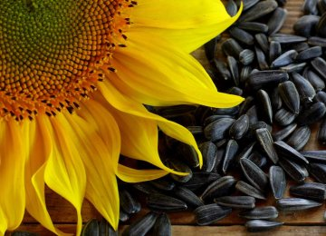 100 Tons of Sunflower Seeds Imported Last Year