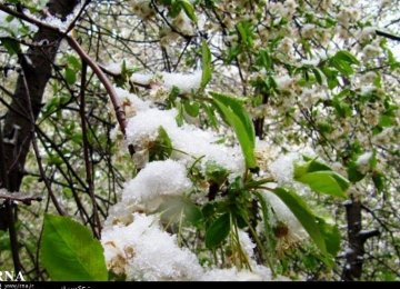 Frost Inflicts Losses Worth $100m on Tehran Agriculture