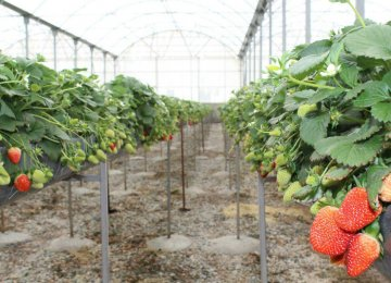 Greenhouse Crop Export Doubles to $500m in Fiscal 2018-19