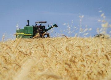 186% Hike in IME Wheat Trading