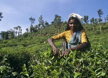 Indian Tea Exporters Cheer Exemption From American Sanctions on Iran