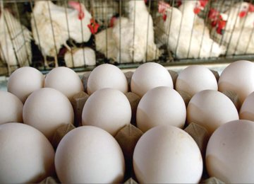 Egg Producers Register 200,000-Ton Monthly Surplus
