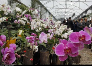 Ornamental Flower Exports at $30-40m p.a.