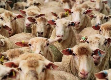 Latest on Light-Weight Livestock Count