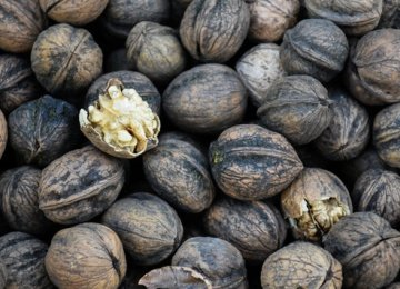 Walnut Smuggled In From US, Chile, Bulgaria