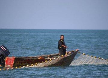 Caspian Sea Sprat Harvest Tops 12,500 Tons