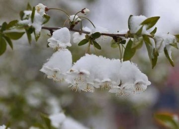 Extreme Weather Drives East Azarbaijan Agro Losses to $42m