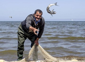 46% Decline in Mazandaran Bony Fish Harvest