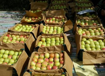 W. Azarbaijan Accounts for Bulk of Apple Exports