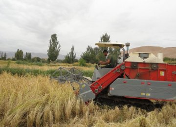 The share of mechanized rice farming has risen from 12.5% to 80% over the past four years.