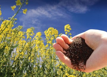The government says it is planning to meet 70% of the domestic demand for oilseeds from local production.