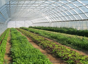 Vegetable, Flower Production to Increase