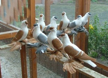 Trade of Ornamental Birds Banned
