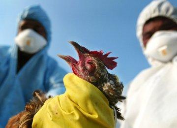 Bird Flu in Chaharmahal