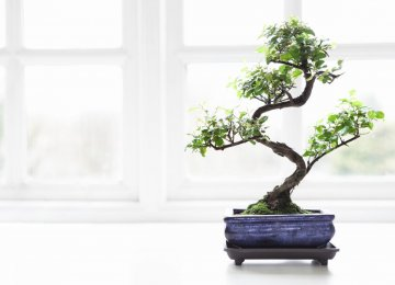 Ban on Bamboo and Bonsai